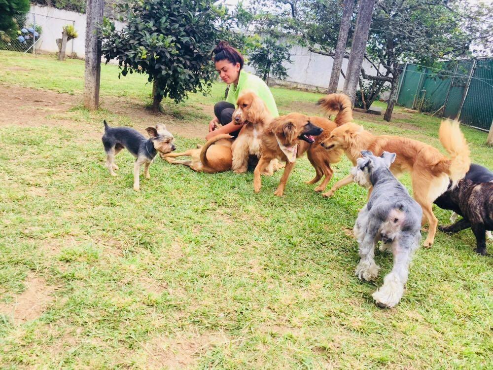Um enorme espaço para os cachorros serem cachorros! Foto: Facebook Pet Club Premium